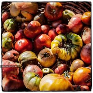 Heirloom Tomatoes Medley :: Fruits & vegetables organic photography - Artwork © Michel Godts