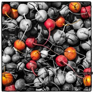 When Coloring Heirloom Radishes :: Root vegetables organic photography - Artwork © Michel Godts