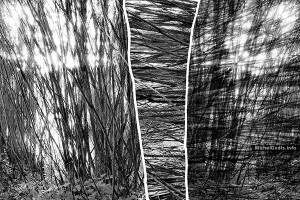 Young Woods Abstract #1 :: Black and white experimental abstract photography - Artwork © Michel Godts