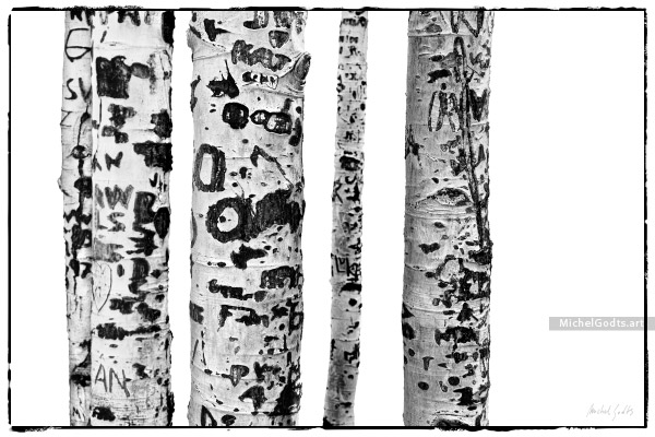 Aspen Bark Carvings :: Black and white abstract realism photography - Artwork © Michel Godts