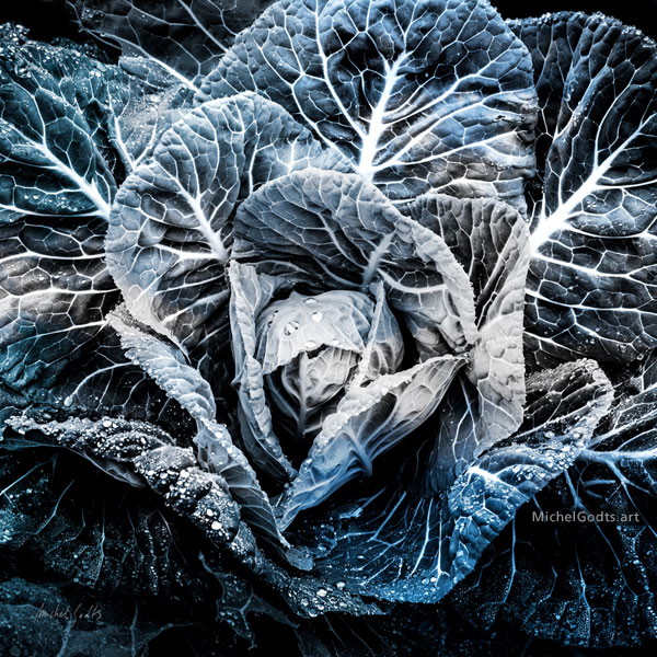 Cabbage Blues :: Abstract realism organic photography - Artwork © Michel Godts