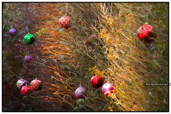 Christmas Hedge :: Christmas season photography - Artwork © Michel Godts