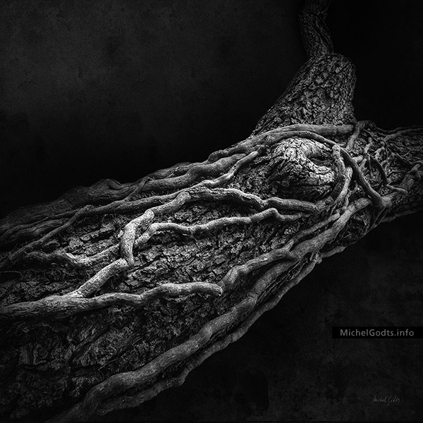 Dead Vine's Embrace :: Black and white abstract realism organic photography - Artwork © Michel Godts