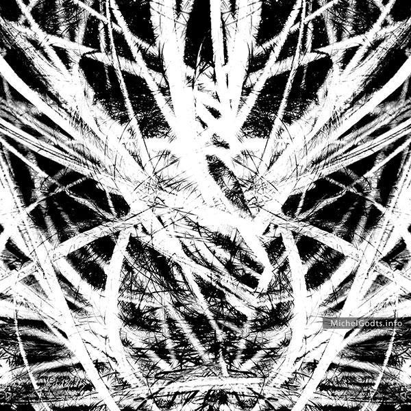 Grass Expression #2 :: Black and white abstract expressionism photography - Artwork © Michel Godts