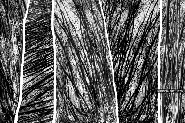 Young Woods Abstract #2 :: Black and white experimental abstract photography - Artwork © Michel Godts